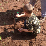 boy gardens at Community Child Care Center