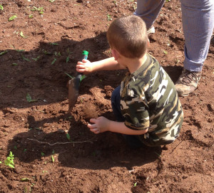 a child gardens as part of the Creative Curriculum at Community Child Care Center